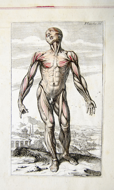 Muscles in French anatomical engraving - Photo by: University of Liverpool Faculty of Health & Life Sciences - Source: Flickr Creative Commons